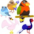 Five colorful cute birds with white background — Imagens vectoriais em stock