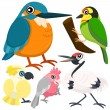 Five colorful cute birds with white background — 图库矢量图片