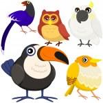 fem färgglada söta fåglar med vit bakgrund — Stockvektor