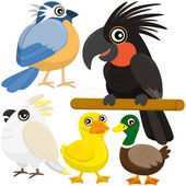 Five colorful cute birds with white background — Stock Vector