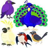 Five colorful cute birds with white background — Vetor de Stock