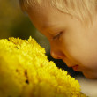 Beautiful young boy, yellow flowers — Stock Photo