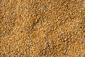 Grains of maize background — Stok fotoğraf