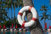 Lifebuoy hanging on a palm tree — Stock Photo