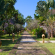 Walking track in a tropical garden — Stok fotoğraf