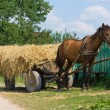 Horse with cart loaded hay — Stock Photo #12271879