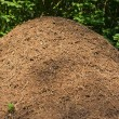 Anthill in a forest — Stock Photo #12271882