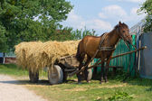 Horse with a cart loaded hay — Stock Photo