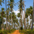 Ground road in jungle , Thailand . — Foto Stock