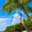 Palm tree on the tropical beach — Stock Photo
