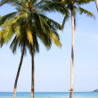 Foto Stock: Sea, beach, jungle and hammock - vacation background