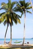Sea, beach, jungle and hammock - vacation background — Stock Photo