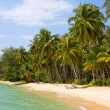 Coconut palm trees on summer beach — Foto Stock
