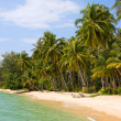 Coconut palm trees on summer beach — Stockfoto