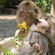 Monkey and cat - 