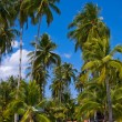 Tropical beach with exotic palm trees — Stock Photo #13640760