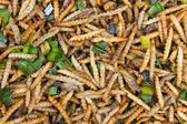 Fried bamboo larvae — Stock Photo