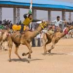 Постер, плакат: Pushkar Camel Mela Pushkar Camel Fair