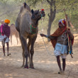 Pushkar Camel Mela (Pushkar Camel Fair) — Foto Stock