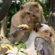 Monkey and cat — Stock Photo