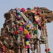 Camel, India — Stock Photo #16762811