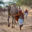 Pushkar Camel Mela (Pushkar Camel Fair) - Stock Photo