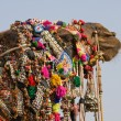 Camel, India — Stock Photo #17570729