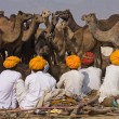 Pushkar Camel Mel(Pushkar Camel Fair) — Stock Photo #17598277