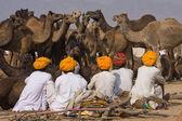 Pushkar Camel Mela (Pushkar Camel Fair) — Stock Photo