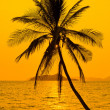 Tropical sunset — Stock Photo #17837825