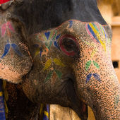 Painted elephant in Jaipur, Rajasthan, India — Stock Photo