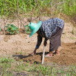 Woman farmer holding spade at field - Stockfoto