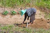 Woman farmer holding spade at field — Stock Photo