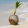 Royalty-Free Stock Photo: Coconut on the beach