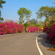 Beautiful summer landscape with road and flowers. — Stock Photo #19981279