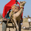 PUSHKAR, INDIA - NOVEMBER 18: Decorated camel and his owner are going to take part at annual pushkar camel mela (fair) on November 18,2012 in Pushkar,Rajasthan,India — Stock Photo