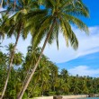 Tropical beach with exotic palm trees — Stock Photo