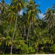 Tropical beach with exotic palm trees — Stock Photo #22601057
