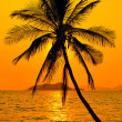 Foto Stock: Tropical sunset