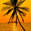 Tropical sunset — Stock Photo #23848803