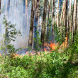 Forest fire — Stock Photo #24999321