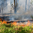 Forest fire — Stock Photo #24999323
