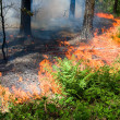 Forest fire — Stock Photo #24999331
