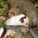 Cat and monkey — Stock Photo