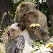 Stock Photo: Monkey and domestic cat , Thailand .