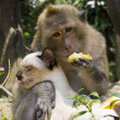 Monkey and domestic cat , Thailand . — Stock Photo