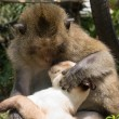 Cat and monkey — Stockfoto
