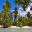 Beautiful tropical beach — Stock Photo #26399293
