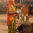 Pushkar Camel Mela. Rajasthan, India. — Stock Photo