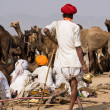 PUSHKAR, INDIA - NOVEMBER 20: Pushkar Camel Mela (Pushkar Camel Fair) on November 20, 2012 in Pushkar, Rajasthan, India. This fair is the largest camel trading fair in the world. — Stock Photo